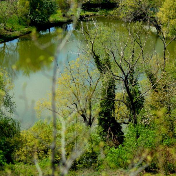 Rybník