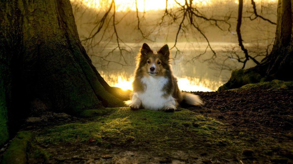 Obec Krásno upozorňuje všetkých majiteľov, ktorí chodia venčiť svojich psov na verejné priestranstvá